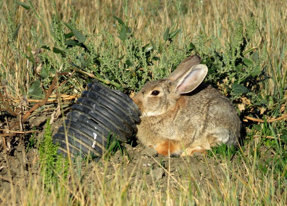 RabbitAPR