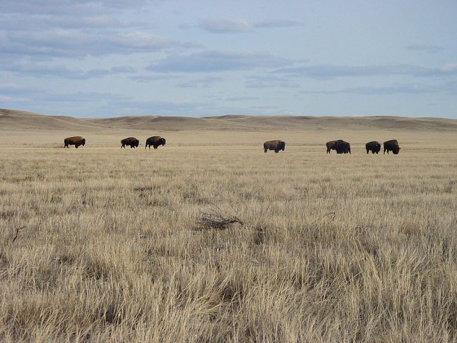 1024px-Saskatchewan_-_Grasslands_National_Park_02
